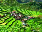 Batad village et rizières en terrasses