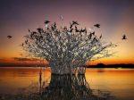 pantanal_eye