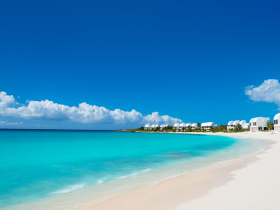 anguilla_eye