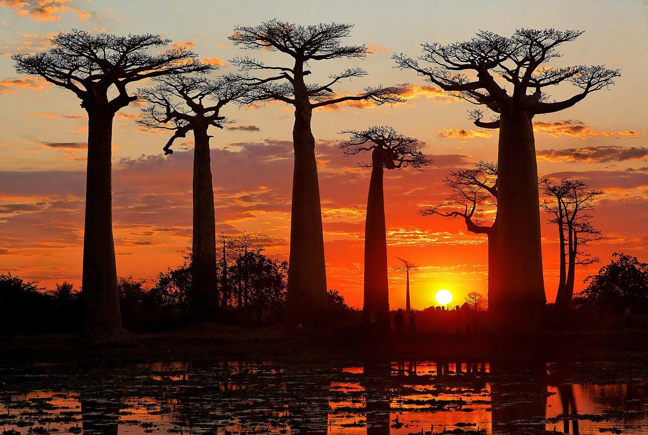 baobab_evening