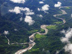 Manu National Park_eye