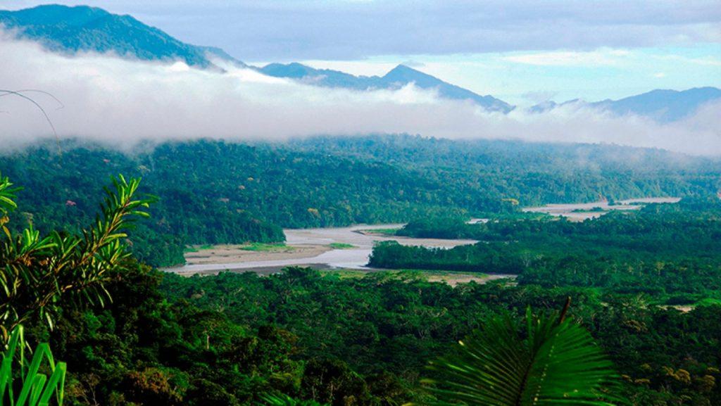 Manu Peru