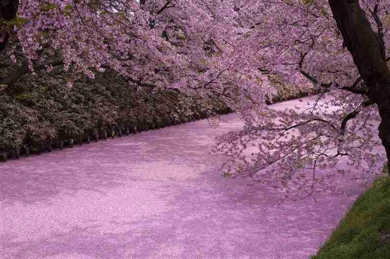 弘前公園1