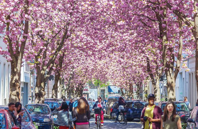 ドイツ ボン 桜3