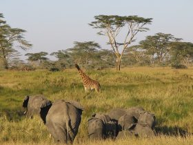 Serengeti_eye