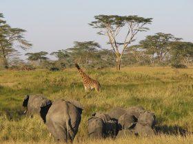 Serengeti_eye