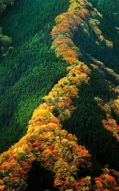 namego_autumn