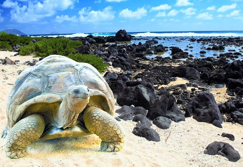 ガラパゴス諸島のビーチ