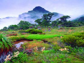タスマニア島4