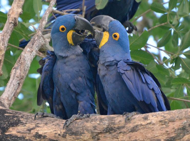 patanal_birds