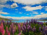 laketekapo_eye