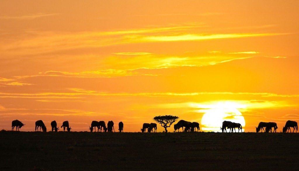 serengeti-national-park_eye