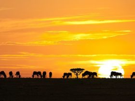 serengeti-national-park_eye