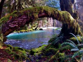 OlympicNationalPark_eye