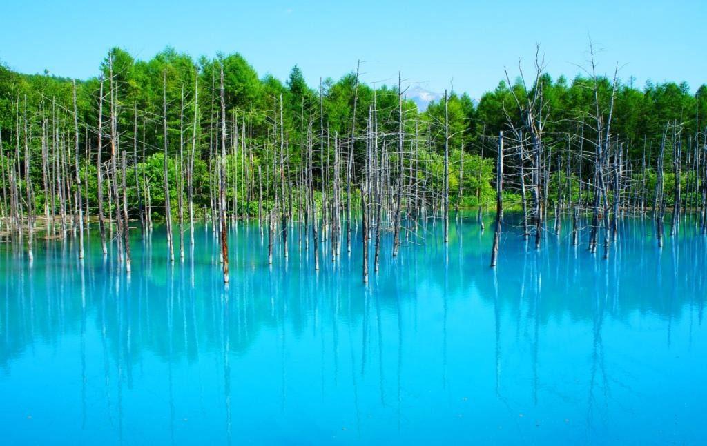18美瑛町 青い池(北海道)