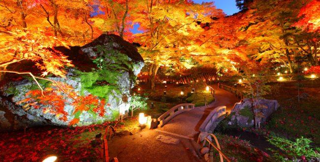 京都 ライトアップ1