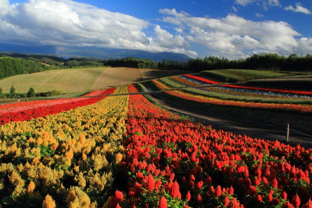 Hokkaido_5