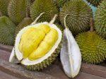 durian_eye
