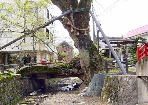 木の根橋(丹波市)