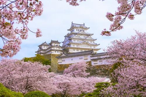 castle_sakura