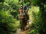 elephant_eye