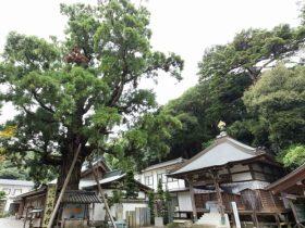 tokushima_eye