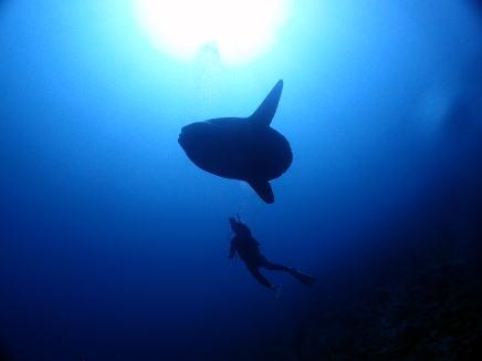 diving_4.2