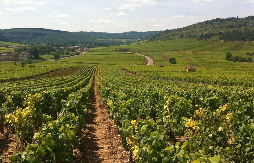 burgundy_wine_1