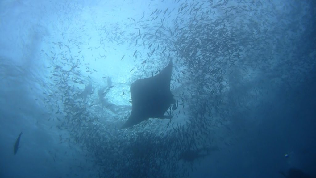 palau_diving_2.1