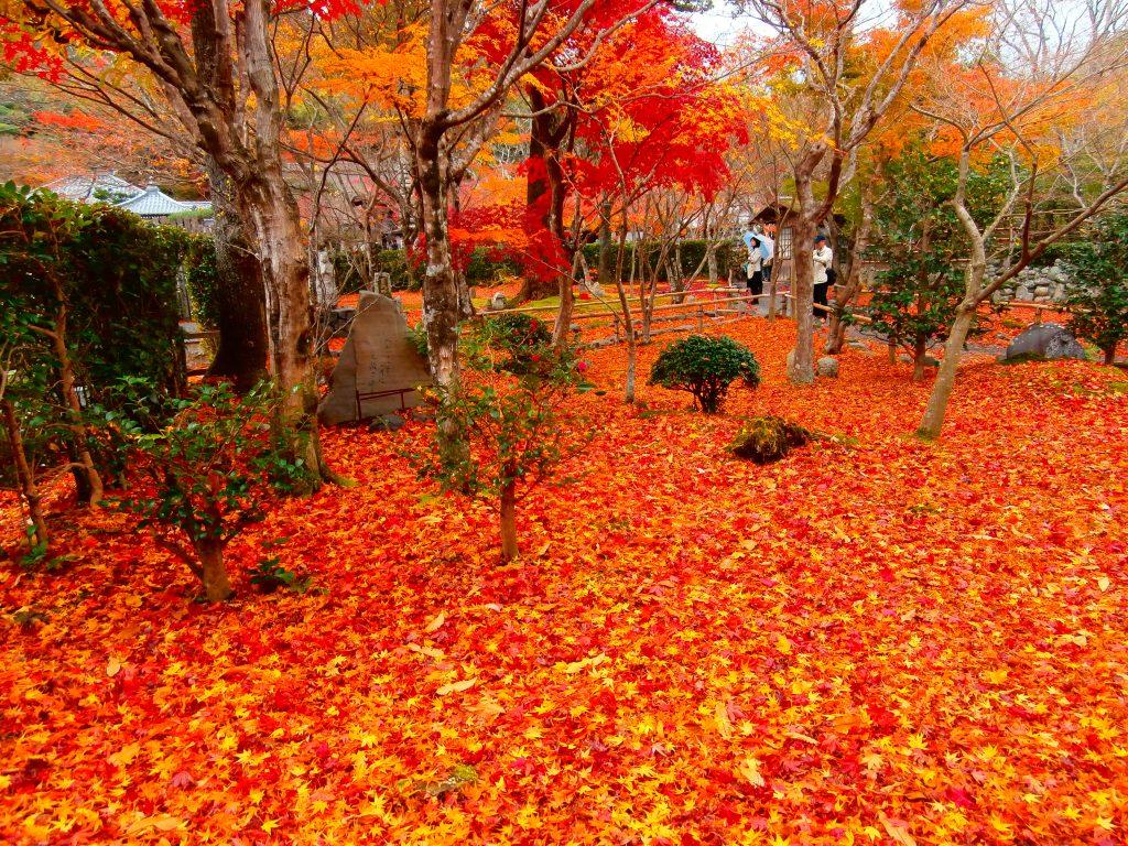 kyoto_koyo_1