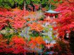 kyoto_koyo_eye