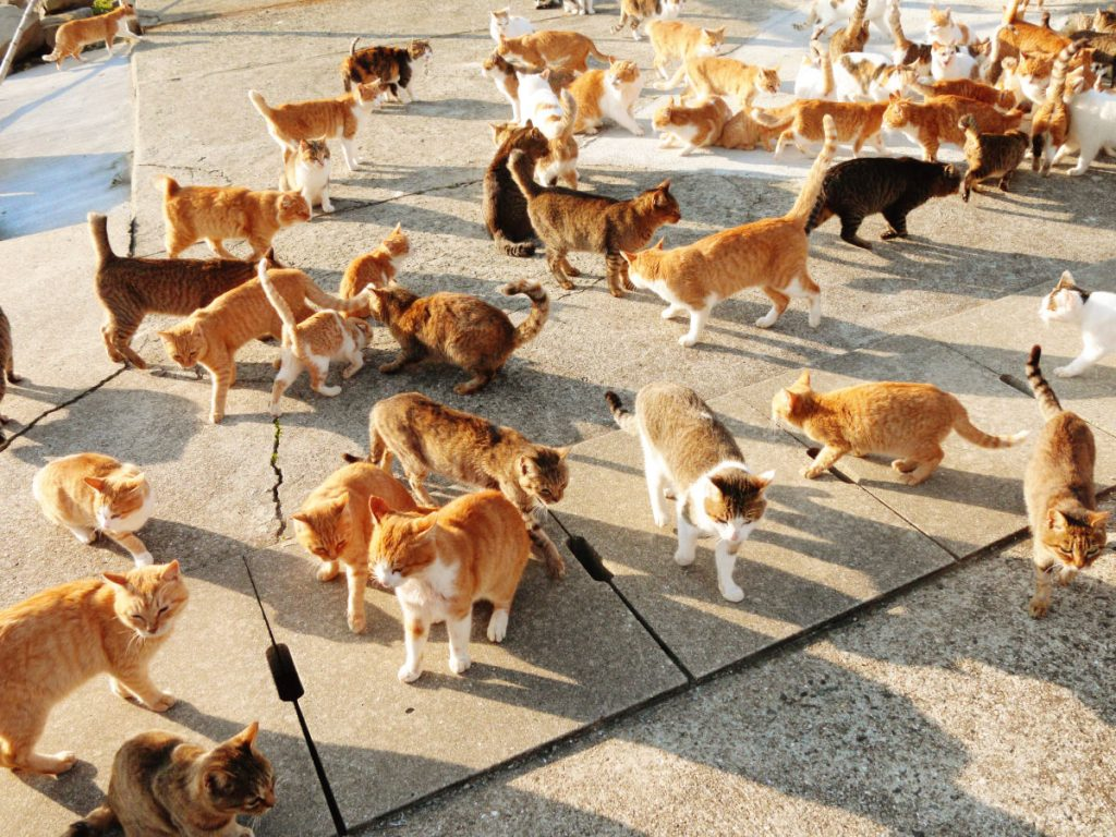 cats_4