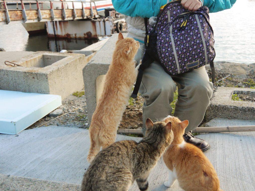 cats_5