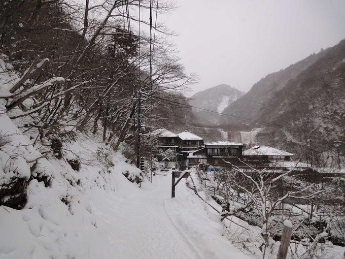 yukimi_7