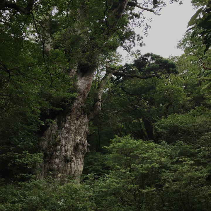 Yakushima_1