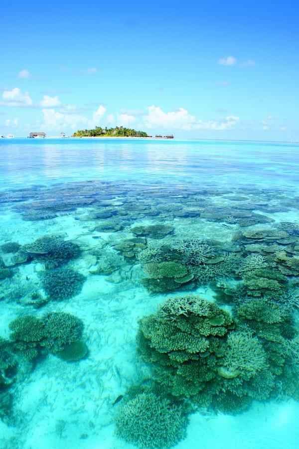 maldives_24