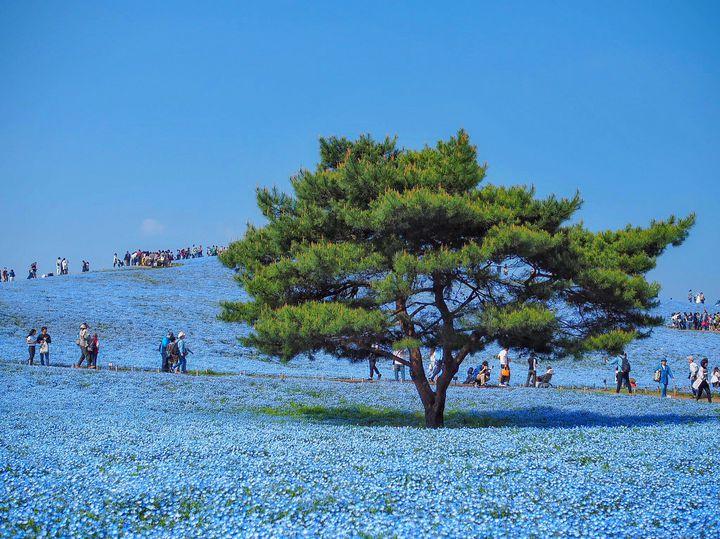 blue_4