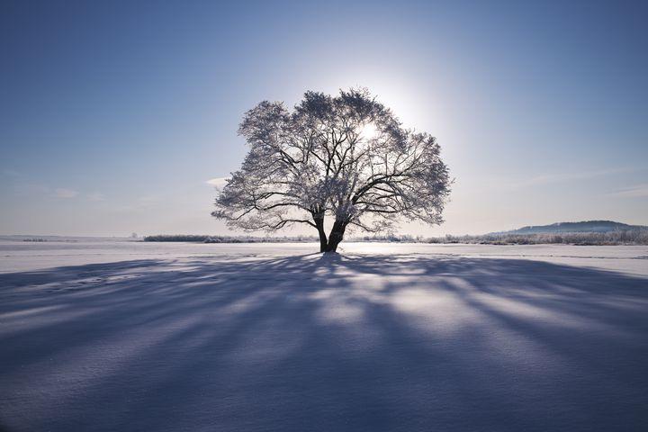 winter_eye