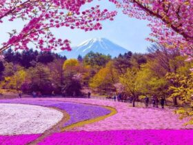 flower_eye