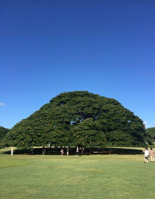 ハワイ モアナルア ガーデンズ パーク