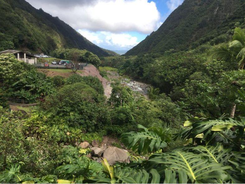 ハワイ イアオ渓谷州立公園