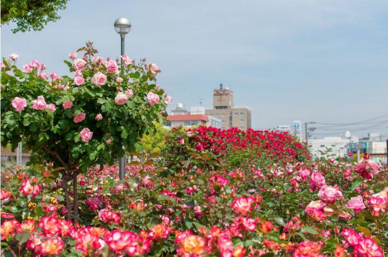 ばら公園(福山市)