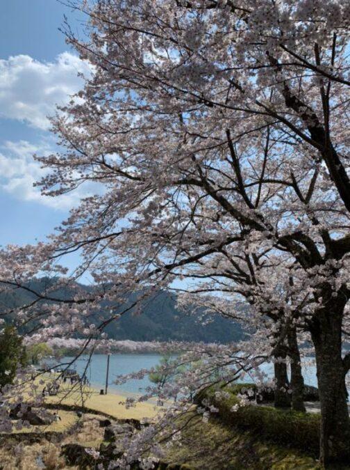 八千代湖(土師ダム)